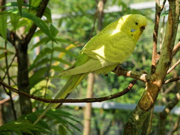Is Bamboo Safe For Budgies? What About The Leaves? – Beak Craze