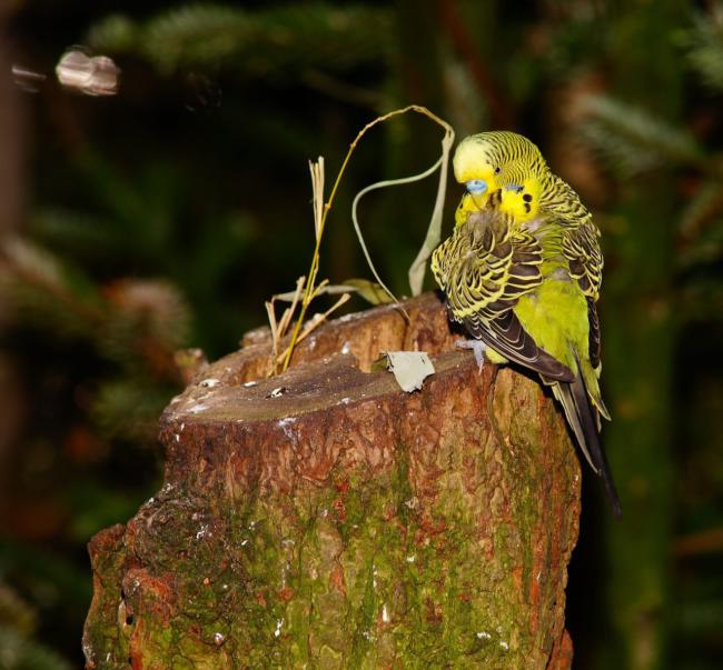 Budgies and mealworms