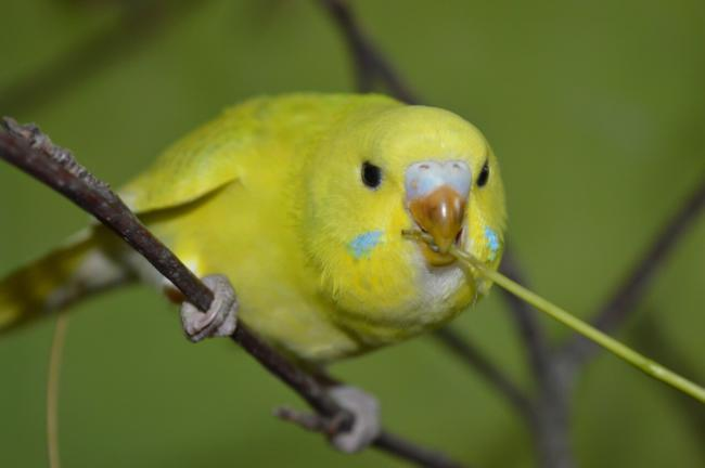 How To Stop A Budgie From Biting?
