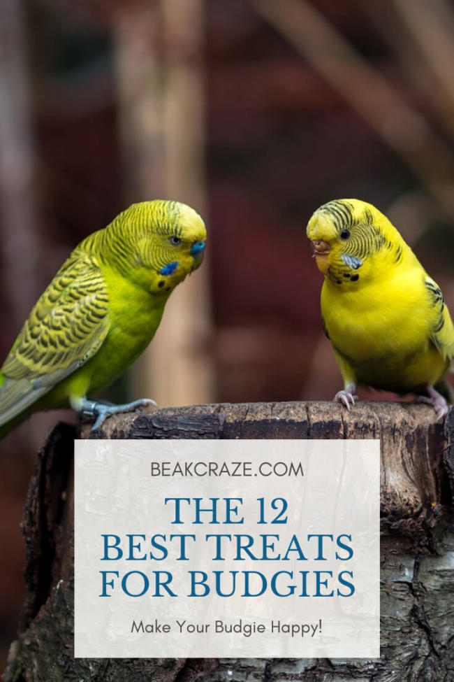 The 12 Best Treats For Budgies Beak Craze