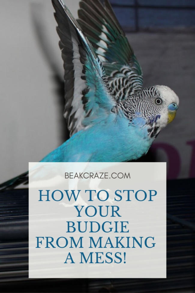How To Stop Your Budgie From Making A Mess