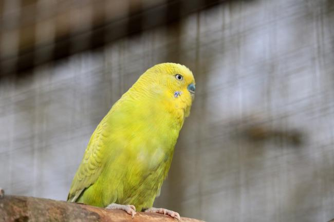 how can I help my budgie not being scared of me?
