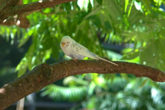 6 Reasons Why Your Budgie Is Drinking So Much Water – Beak Craze