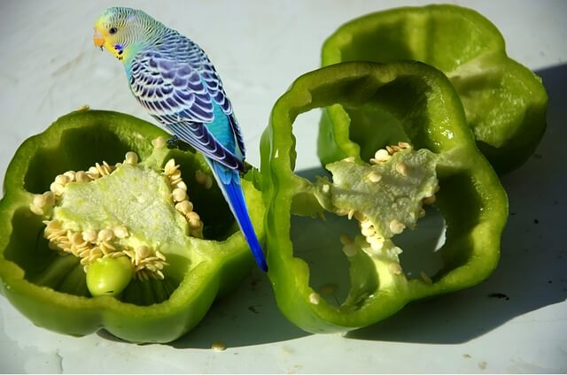 Budgies And Vegetables