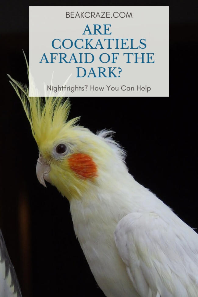 Are Cockatiels Afraid Of The Dark?