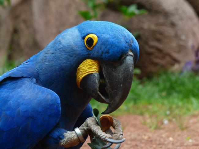 Do parrots only eat greens ond seeds?
