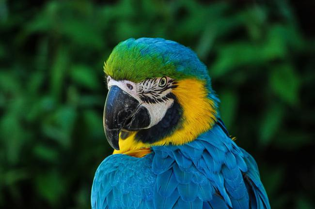 how hard is it to keep parrots?