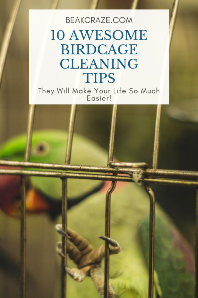 Bird cage cleaning tips