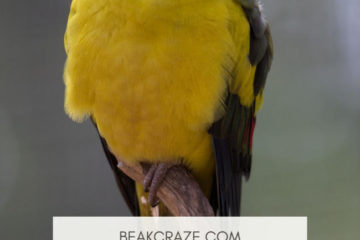 Why don´t birds fall off their perches when they sleep?