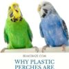 Are plastic perches bad for budgies?
