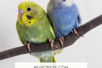 are budgies afraid of the dark?