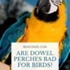 are dowel perches bad for birds?