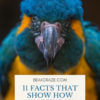 Are Macaws Intelligent?
