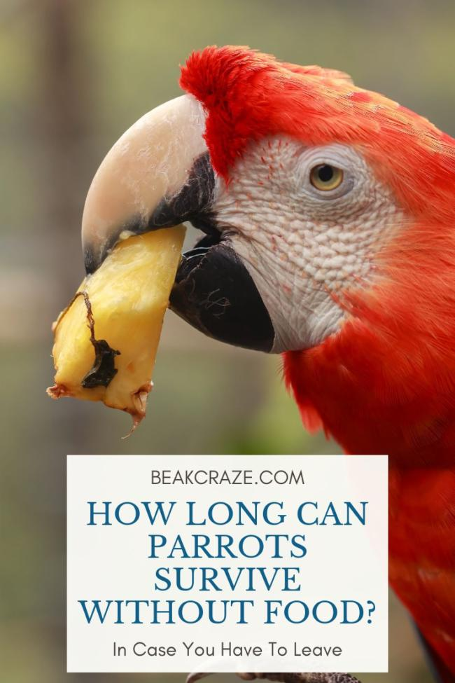 How long can parrots live without food?