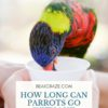 How long can parrots go without water?