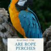 Are Rope Perches Good For Birds?