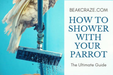 How to shower with your parrot