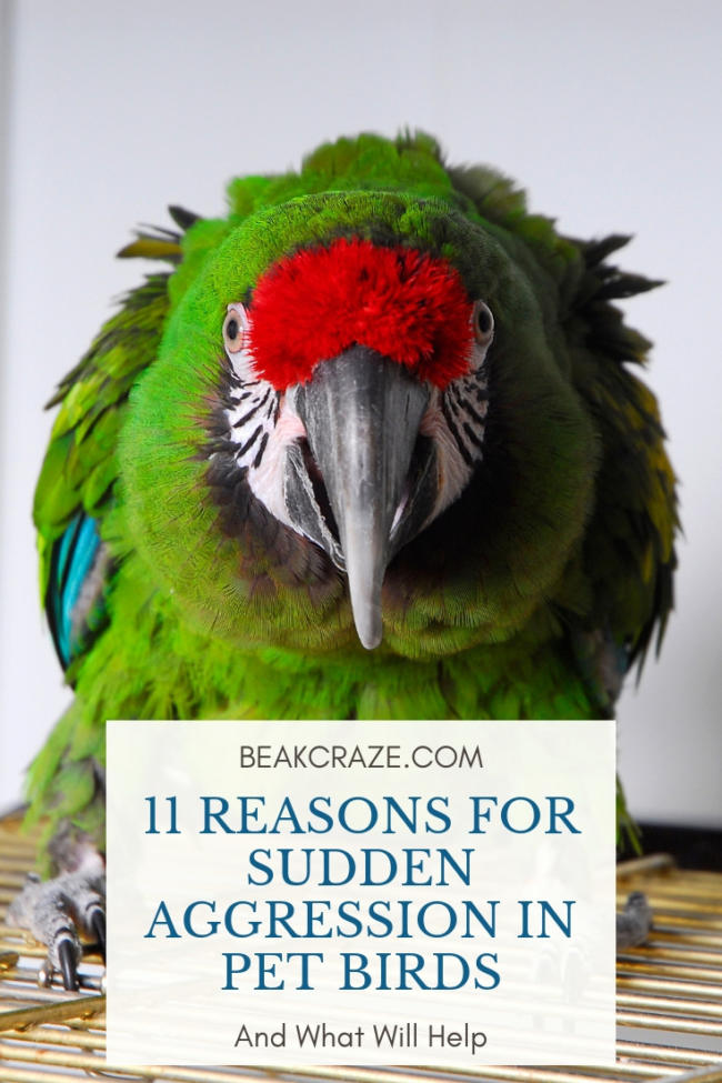 Why is my bird suddenly aggressive?