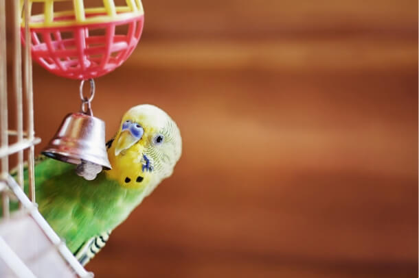bad toys for budgies