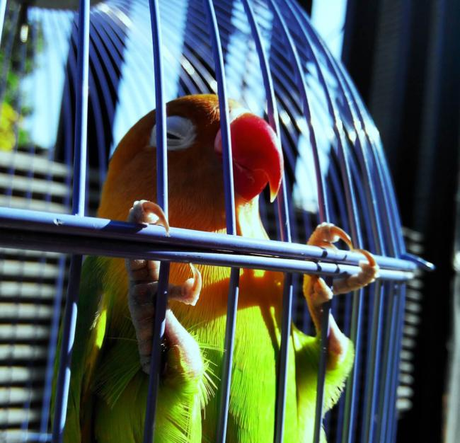 Lovebirds are one of the most affectionate bird species