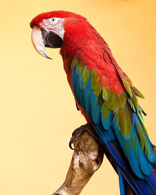 are macaws easy to take care of?