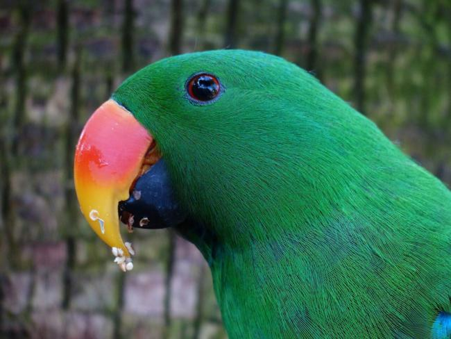 How long can parrots live without food and water?