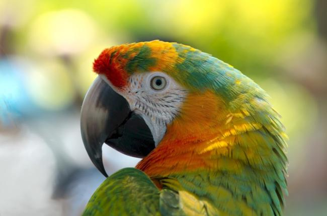what do I need to take care of a macaw?