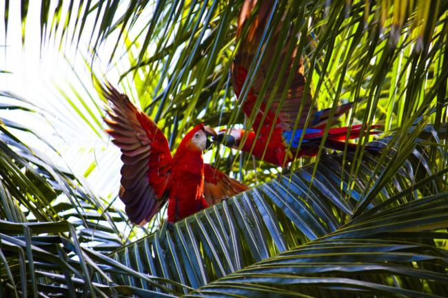 How Smart are macaws actually?
