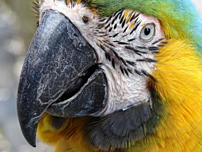 are dogs as smart as parrots?