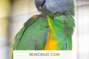 Why is my parrot afraid of me?