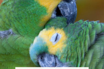 Can parrots be left alone?