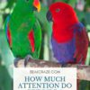 how much attention do birds need?