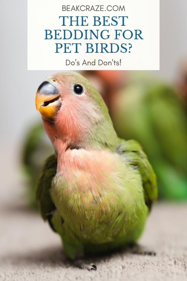 What is the best bedding for pet birds?