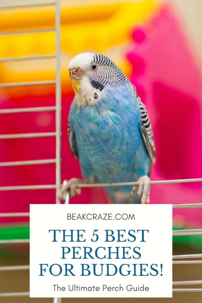 best perches for budgies