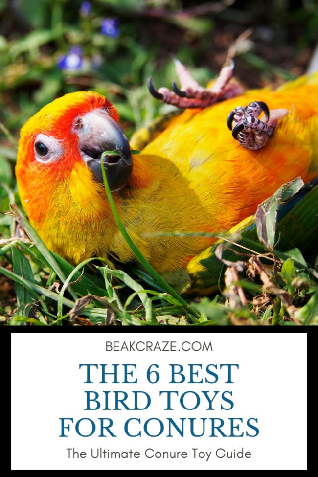 best toys for conures