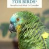 Are heated perches safe for birds?