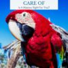 Are macaws hard to take care of?