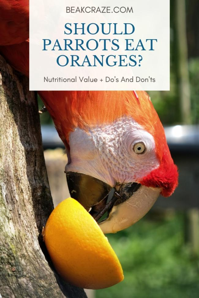 Can parrots eat oranges?