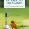 Do parrots like swings?