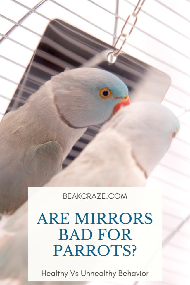 Are mirrors bad for parrots?