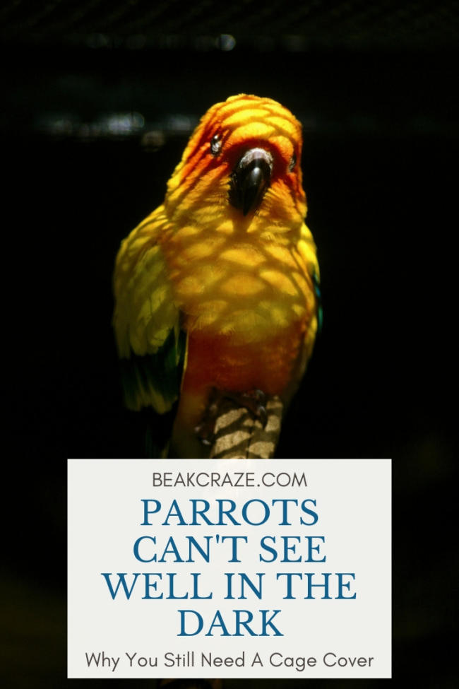 Can parrots see in the dark?