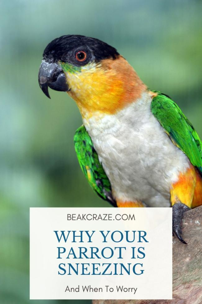 Why is my parrot sneezing?