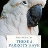 which parrots have the worst bite?