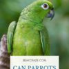 Can parrots eat lemons?