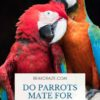 Do parrots mate for life?