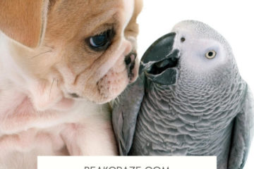 Are parrots good with dogs?