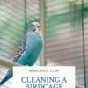 Can I Clean A Bird cage with vinegar?