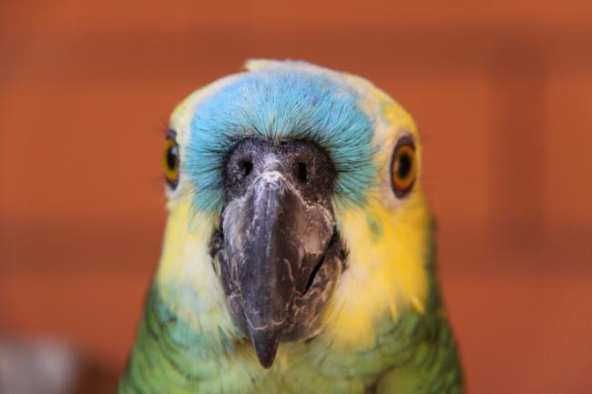 are baby toys safe for parrots to play with?