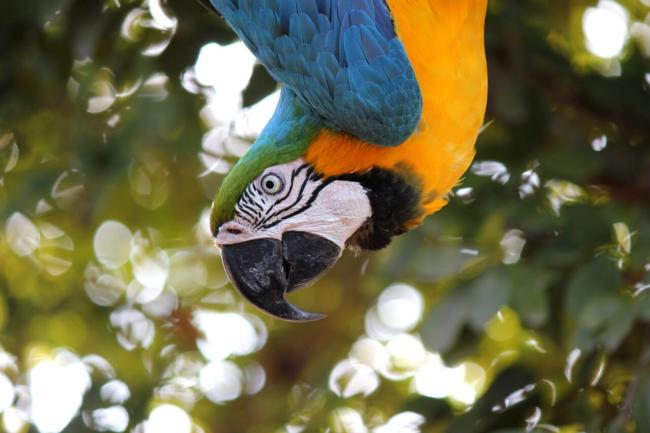 how to calm an aggressive macaw