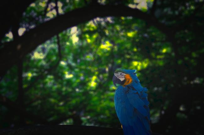 Do parrots have good night vision?